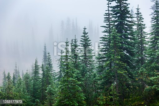 istock Pine trees inside Mount Rainier covered by mist in winter. 1253177973