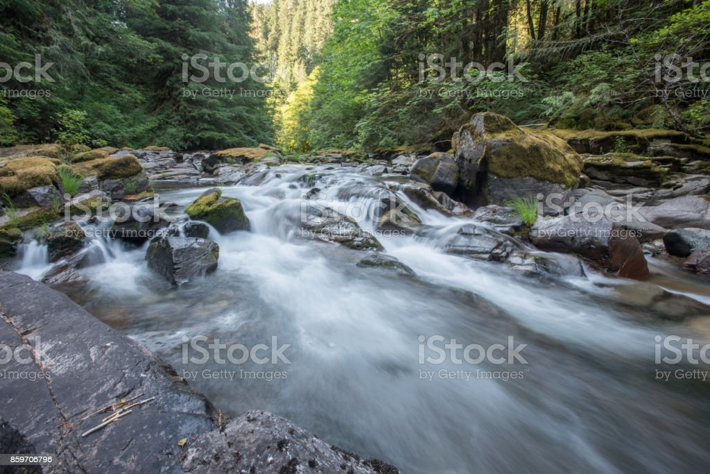 Pine Trees Line a Rushing River stock photo