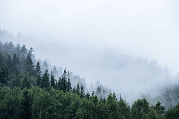 pine trees on mountain in mist – Foto