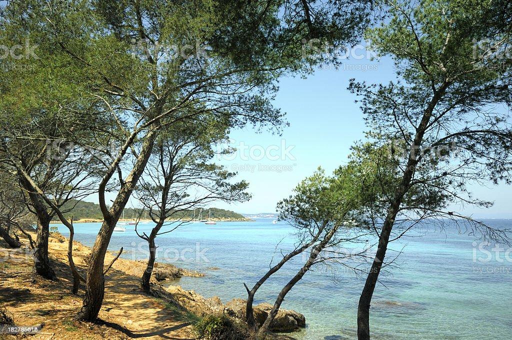 Pine trees on the shore stock photo