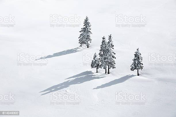 Photo of Pine Trees On White Field