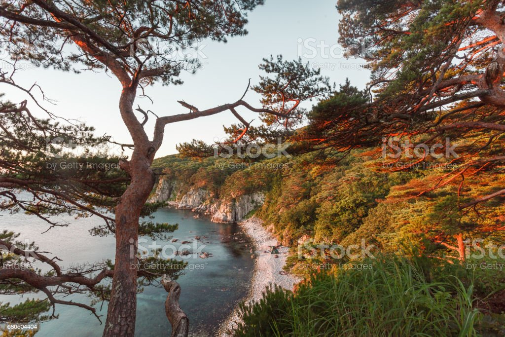 Pine trees over sea coast zbiór zdjęć royalty-free
