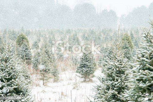 A zoomed out view of a Christmas tree farm. Snow is gently falling.