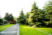 Pine trees in a park.