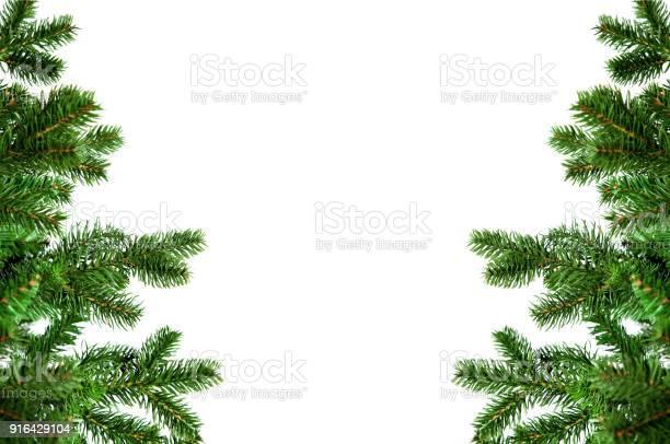 Pine trees picture id916429104?b=1&k=6&m=916429104&s=612x612&h=l0mv6atcoqx25pcu9k4mjpr02djf0njrekhc1r g5vs=