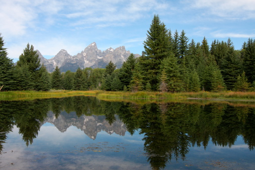Pine Trees Reflecting Stock Photo - Download Image Now