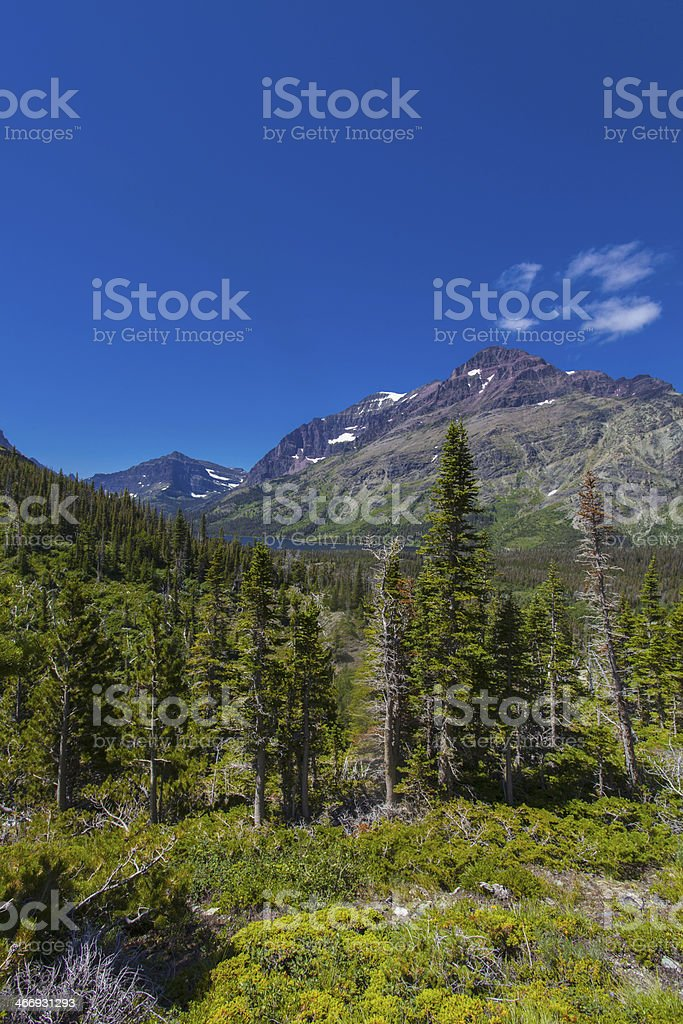 Pine Trees set among the Mountains royalty-free stock photo