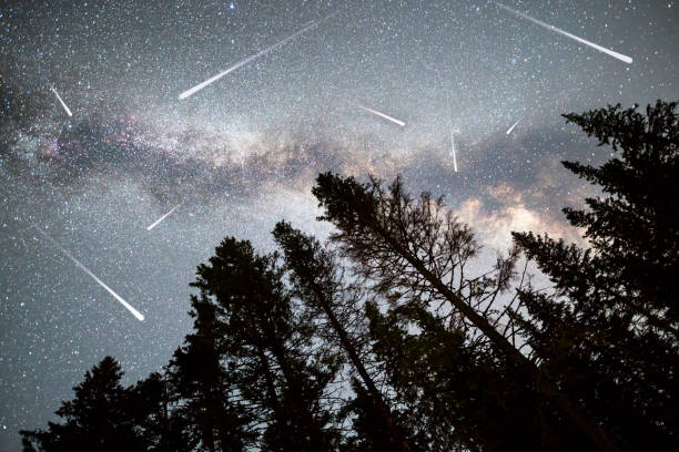 pine trees silhouette milky way falling stars - shooting stars stock photos and pictures