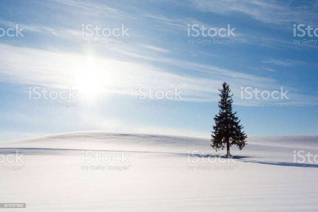 Pine trees standing on the snowy field and sun stock photo