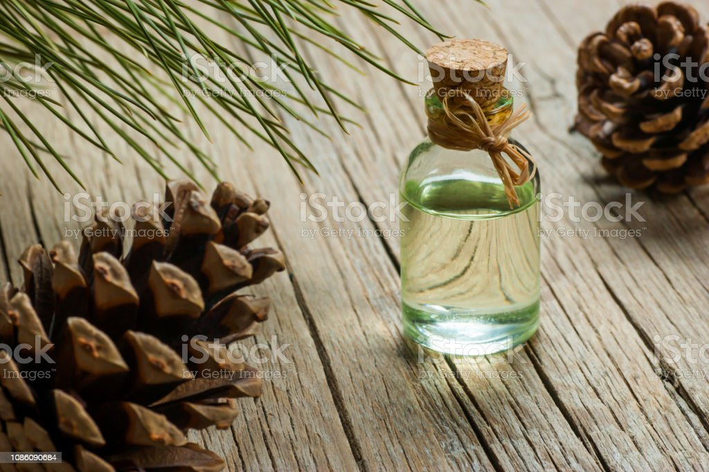 Pine Turpentine Essential Oil In Glass Bottle With Pine Coniferous