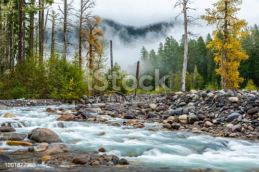 Pine woods with flowing stone river inside tropical forest of Mount Rainier, Seattle, USA.