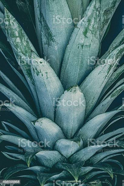 Photo of Pineapple Crown