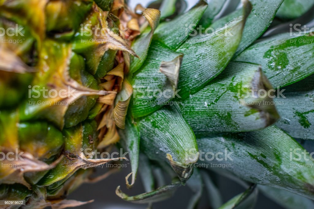 pineapple neck leaf and skin stock photo