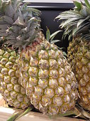 Pineapple or Ananas comosus.