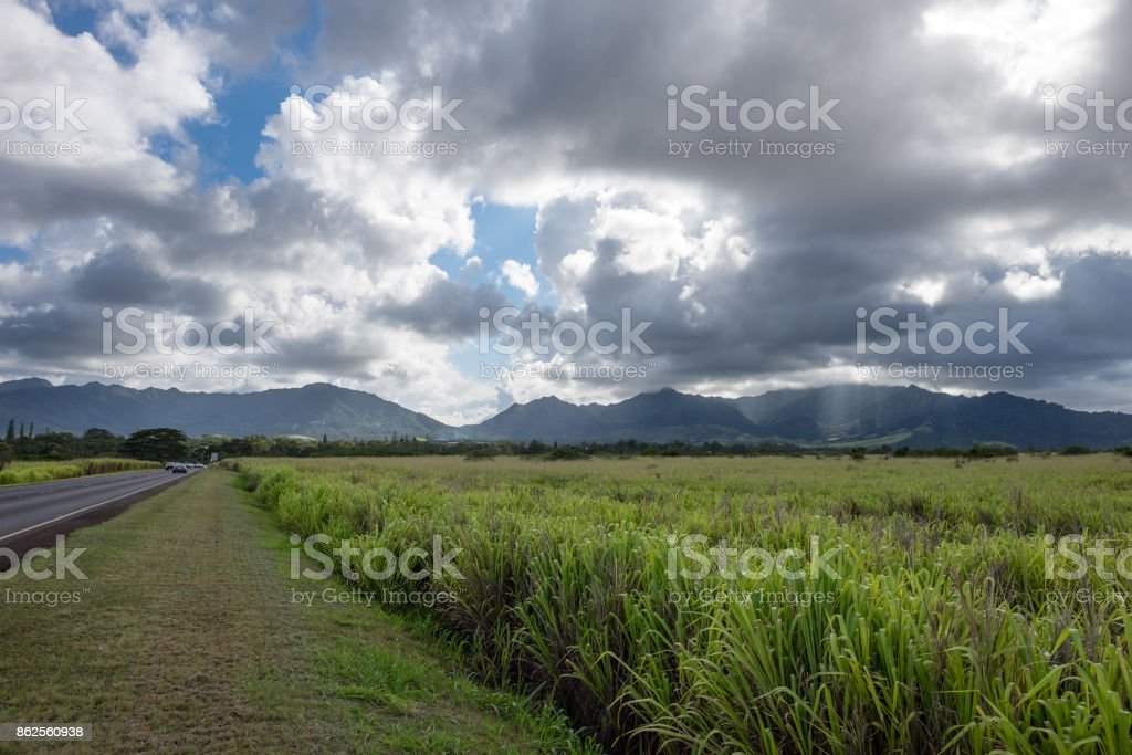 Pineapple Plantation in Hawaii stock photo