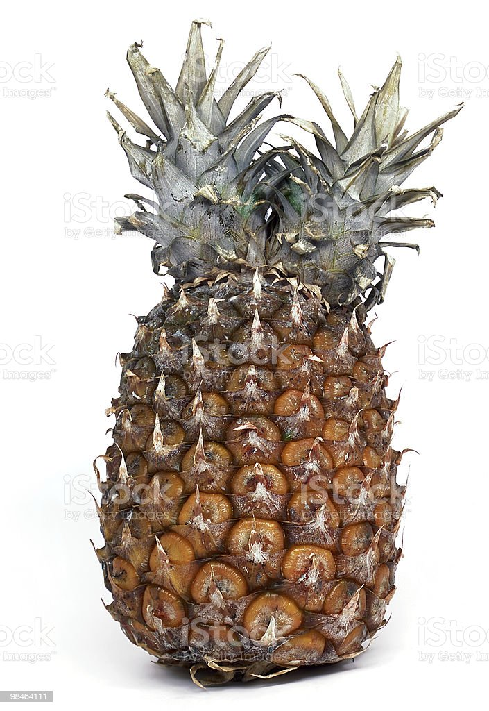 Pineapple with a double stalk royalty-free stock photo