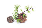 istock pinecone isolated on white background 183346881
