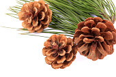 istock Pinecone on branch  on white background 1218341402