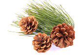 istock Pinecone on branch  on white background 1218341456
