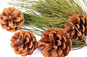 istock Pinecone on branch  on white background 1218360719