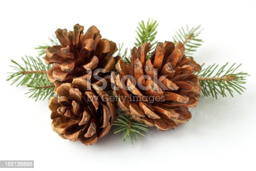 Branch and pine cones on white background