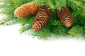 istock Pinecone on branch 184917379