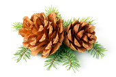 istock Pinecone on branch 185408026
