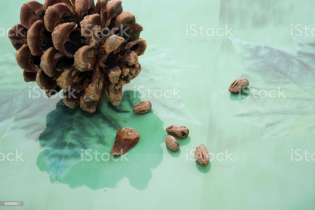 Pinecone reflections royalty-free stock photo