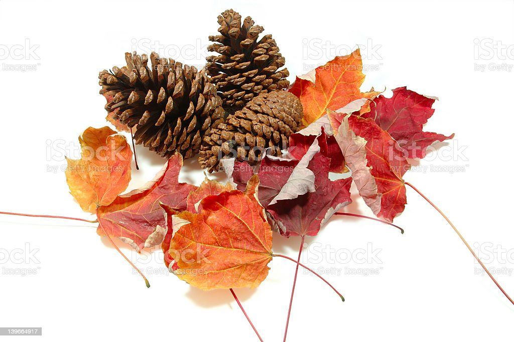 Pinecones and Maple Leaves stock photo