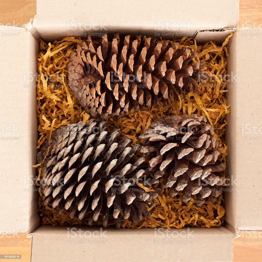 Pinecones in cardboard box royalty-free stock photo