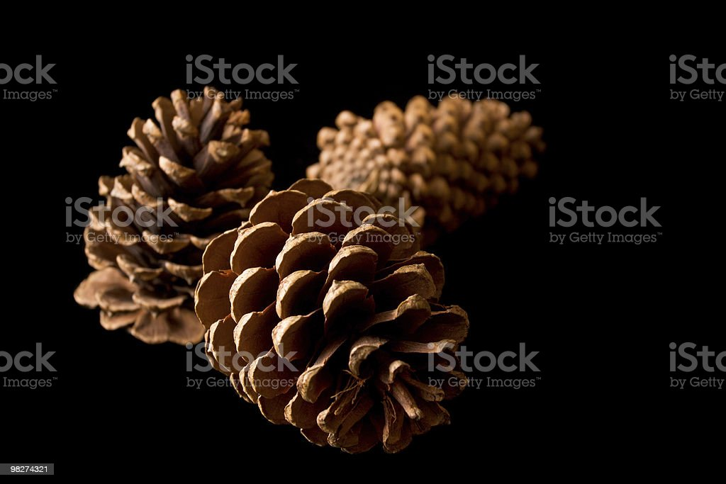 Pinecones on Black royalty-free stock photo