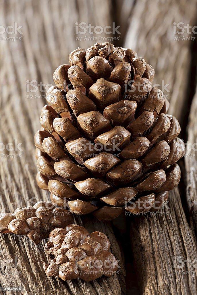 Pinecones royalty-free stock photo