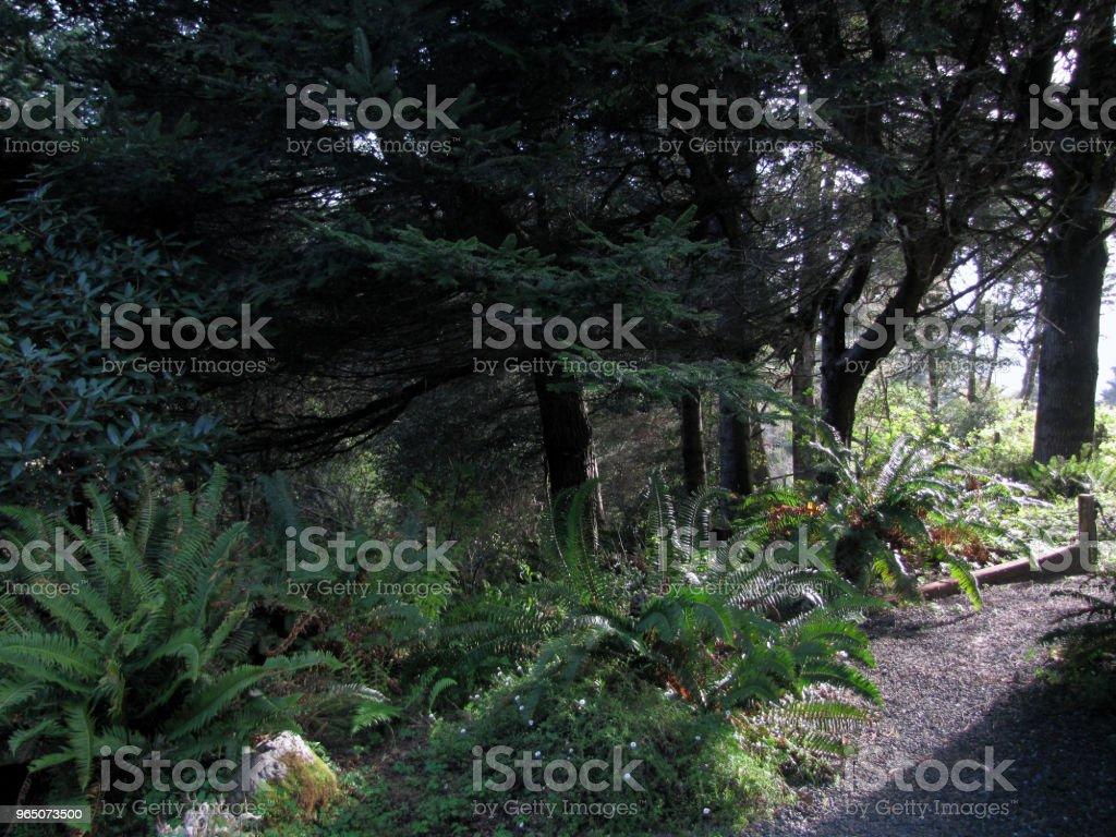 GARDEN SCENE Pines and Ferns at Sunset royalty-free stock photo