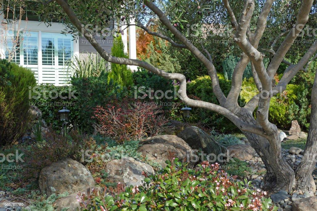 TUIN scène Pines olijven Berberisfamilie & rotsen - Royalty-free Aangelegd Stockfoto
