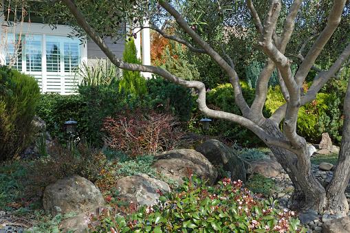 Tuin Scène Pines Olijven Berberisfamilie Rotsen Stockfoto en meer beelden van Aangelegd