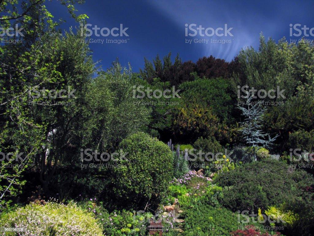 GARDEN HILLSIDE SCENE Pines Olives Buckeye Maples Under Clouds GARDEN HILLSIDE SCENE Pines Olives Buckeye Maples Under Clouds Architecture Stock Photo