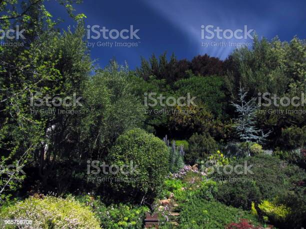 Garden Hillside Scene Pines Olives Buckeye Maples Under Clouds Stock Photo - Download Image Now