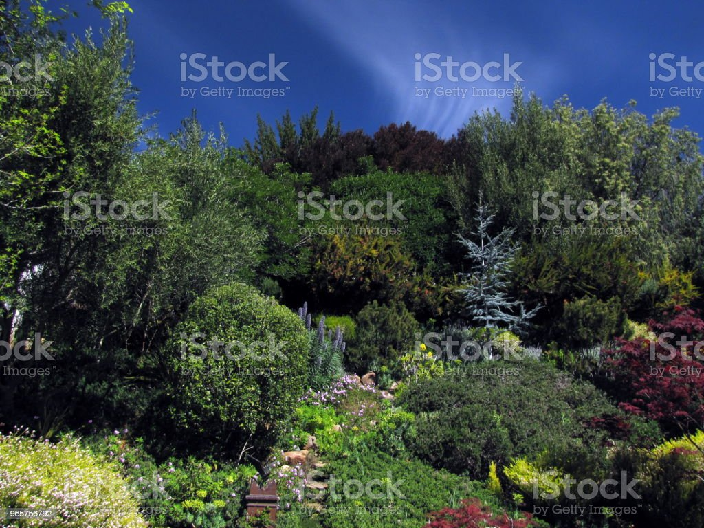 Tuin heuvel scène Pines olijven Buckeye Maples onder de wolken - Royalty-free Aangelegd Stockfoto