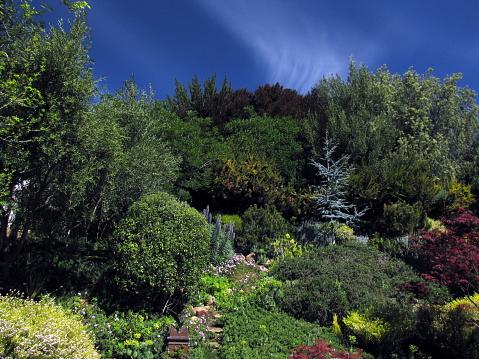 Tuin Heuvel Scène Pines Olijven Buckeye Maples Onder De Wolken Stockfoto en meer beelden van Aangelegd