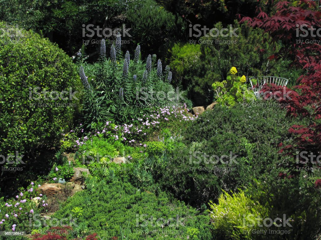 GARDEN HILLSIDE SCENE Pines Olives Buckeye Maples Under Clouds - Royalty-free Architecture Stock Photo