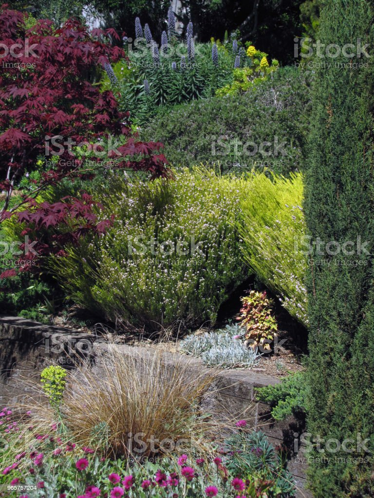 GARDEN HILLSIDE SCENE Pines Olives Buckeye Maples Under Clouds - Royalty-free Ajardinado Foto de stock