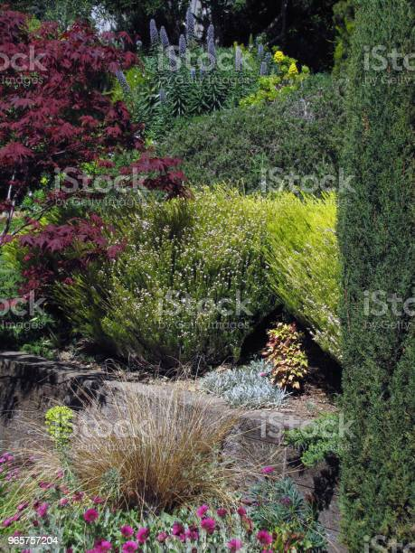 Garden Hillside Scene Pines Olives Buckeye Maples Under Clouds - Fotografias de stock e mais imagens de Ajardinado