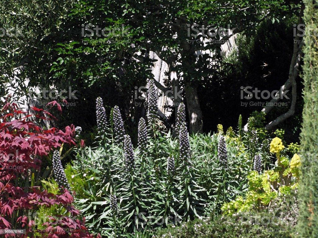 GARDEN SCENE Pines Olives Buckeye & Pride of Madiera royalty-free stock photo