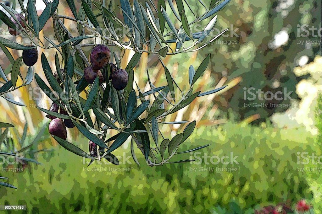 TUIN scène Pines olijven - Royalty-free Aangelegd Stockfoto