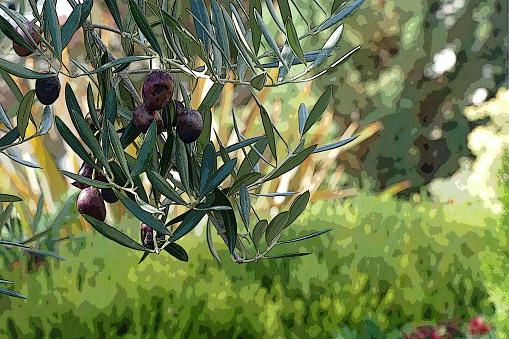 Tuin Scène Pines Olijven Stockfoto en meer beelden van Aangelegd