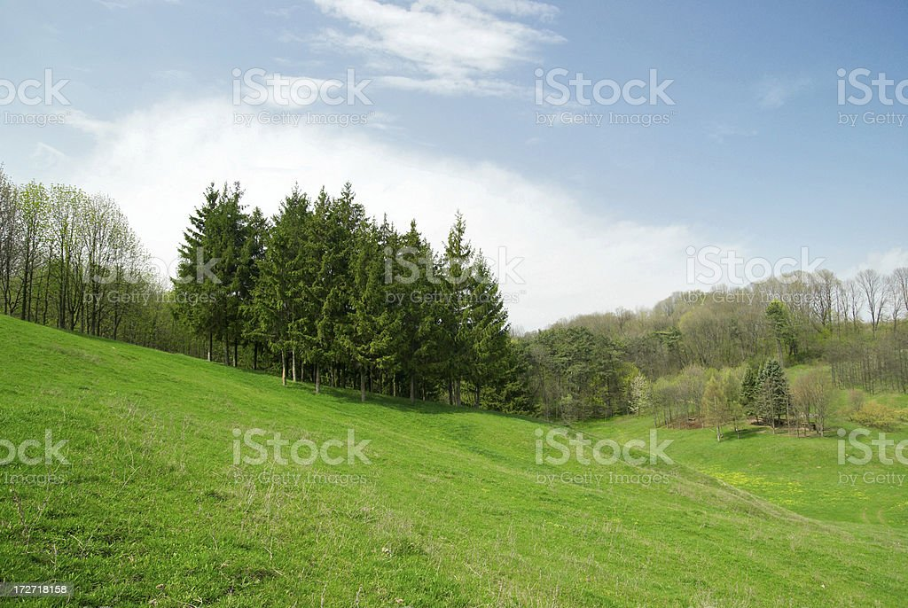 pines royalty-free stock photo