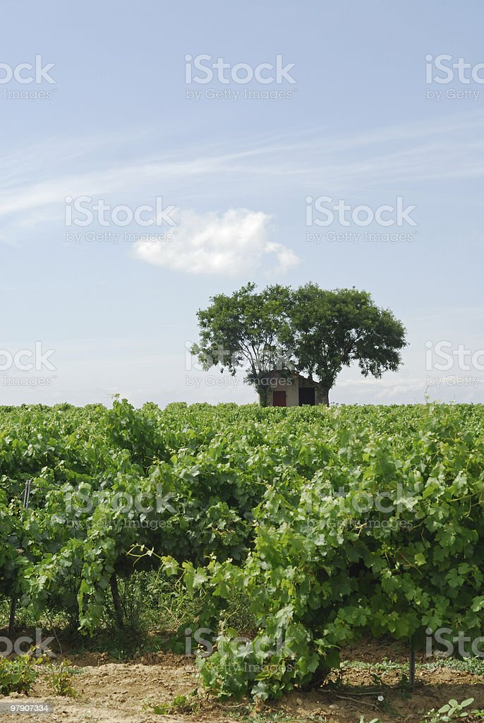 Pinet (France, near Beziers) - Vineyards royalty-free stock photo
