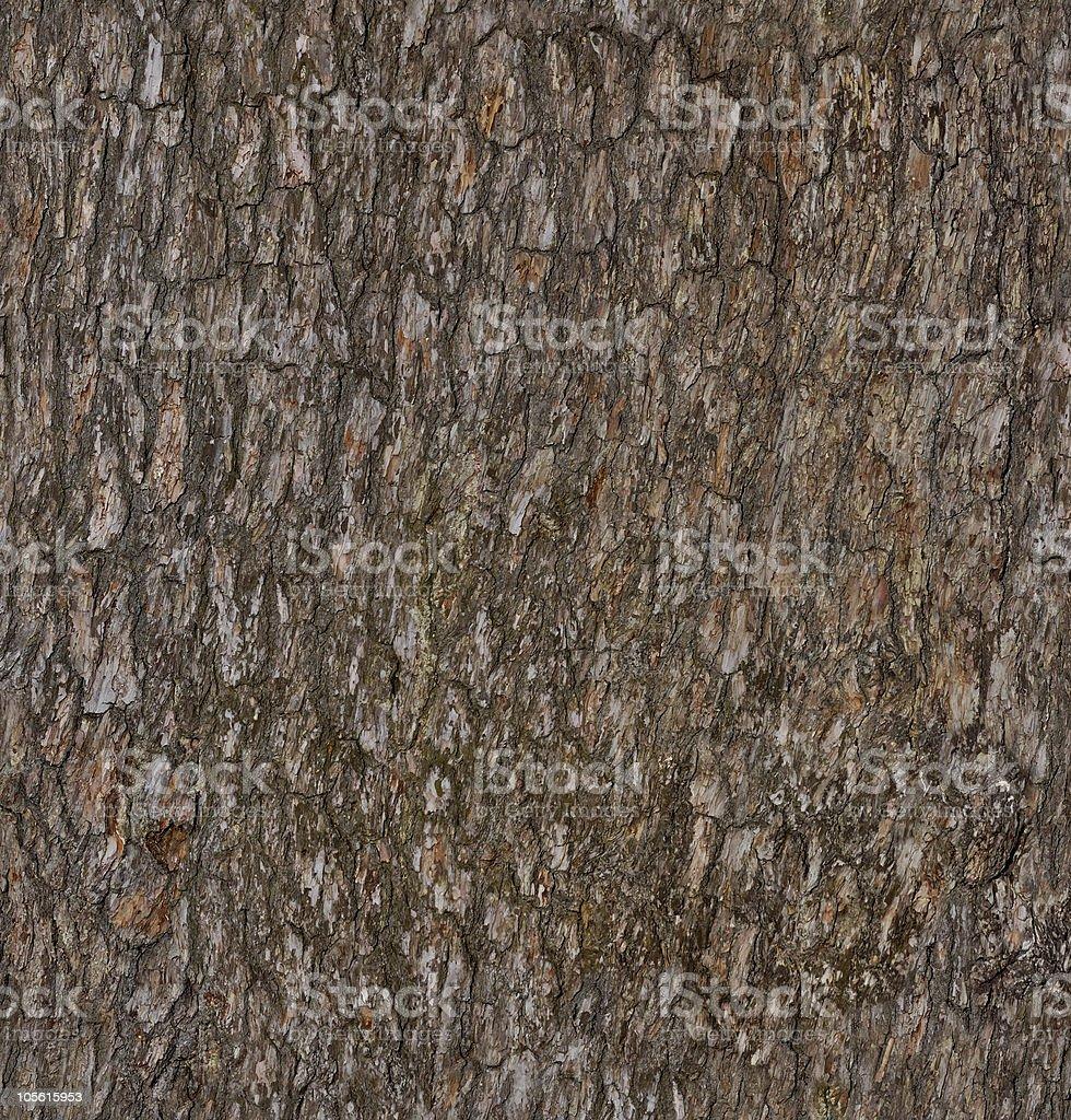 Pine-tree bark texture background royalty-free stock photo