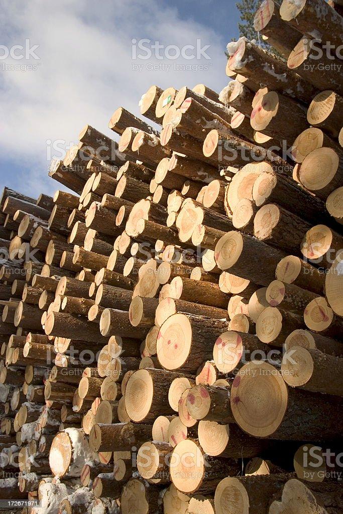 pinetree logs stock photo
