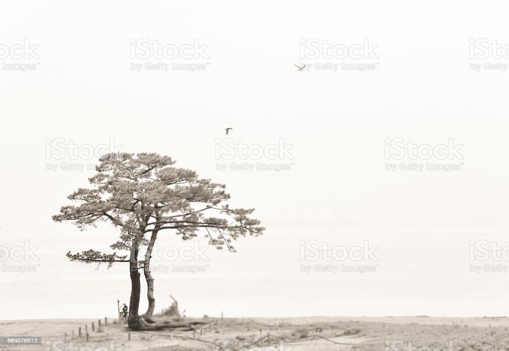 pinetree - Royalty-free Beauty Stock Photo